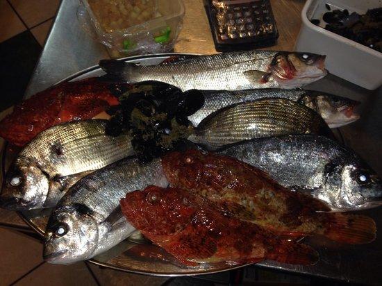 Enchante: Daily fresh fish