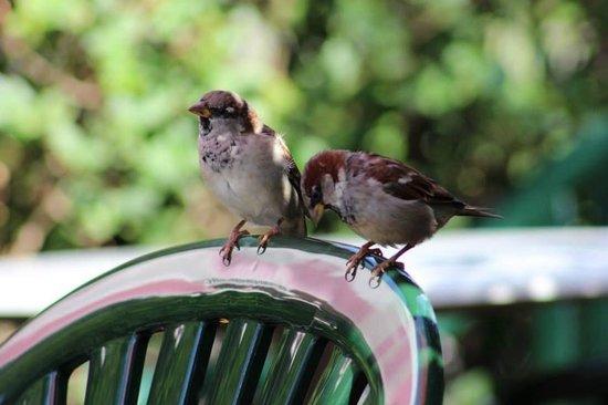 Volksgarten: The birds were sitting next to us