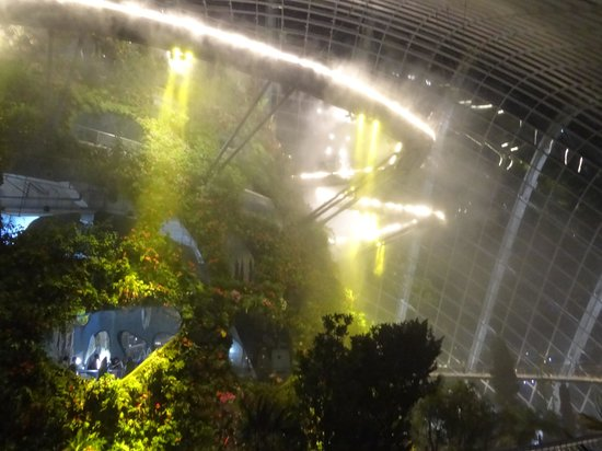 Cloud Forest : the beautiful bridge