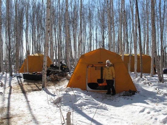 Paws for Adventure: Arctic tents