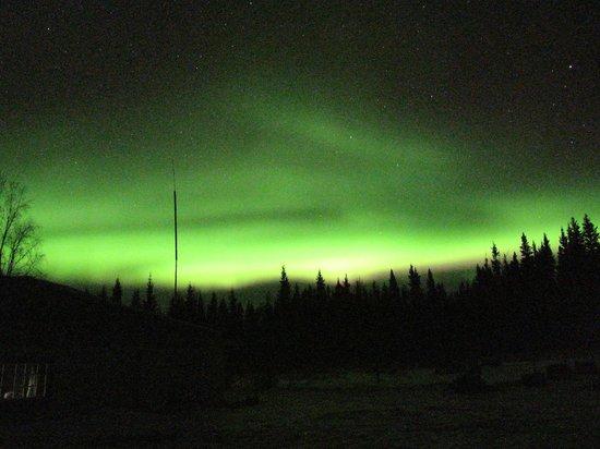 Paws for Adventure: Aurora borealis