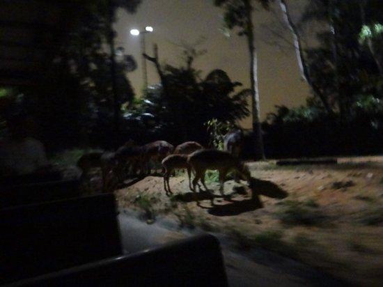 Night Safari : enjoying the dinner