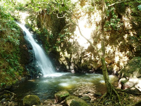 Rinconcito Lodge: Jungle Falls