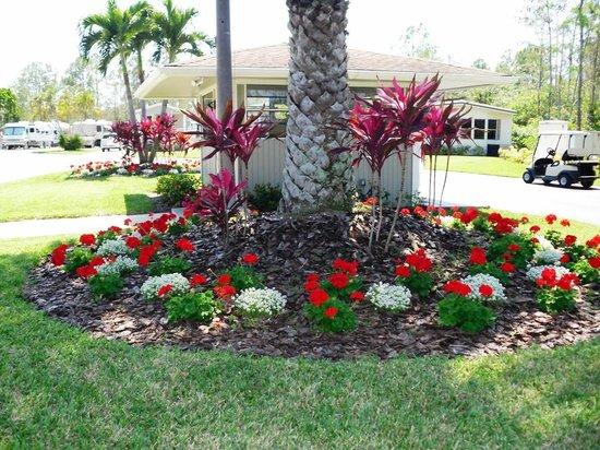 Club Naples RV Resort: Beautiful flowers
