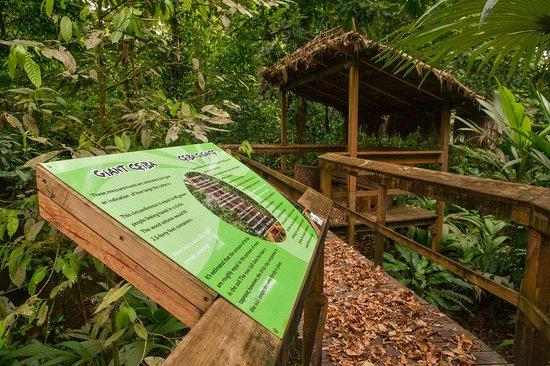 Cinco Ceibas Rainforest Reserve and Adventure Park : Part of the boardwalk