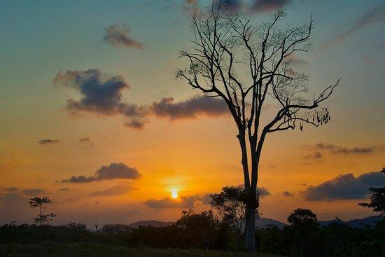 Cinco Ceibas Rainforest Reserve and Adventure Park : Sunset