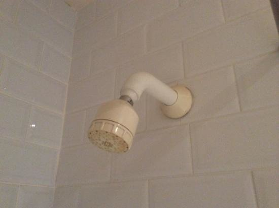 Imperial Hotel: mouldy showerhead