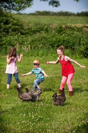 Away From It All : kids with the chicken