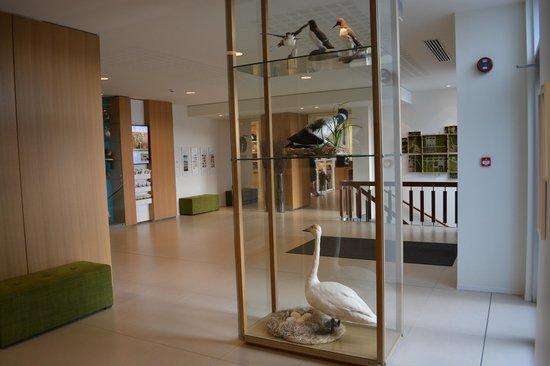 Icelandair Hotel Reykjavik Natura : Lobby art