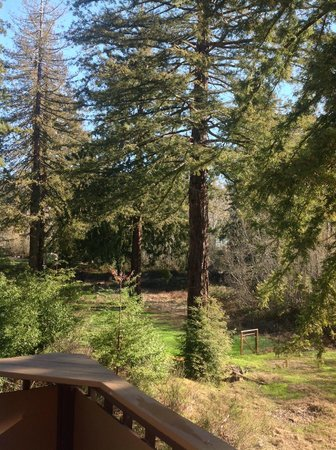 West Sonoma Inn & Spa: View from our deck in the Redwood Cottage
