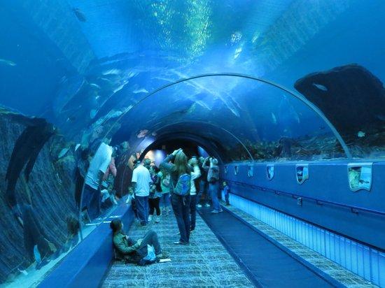 Georgia Aquarium : walk through