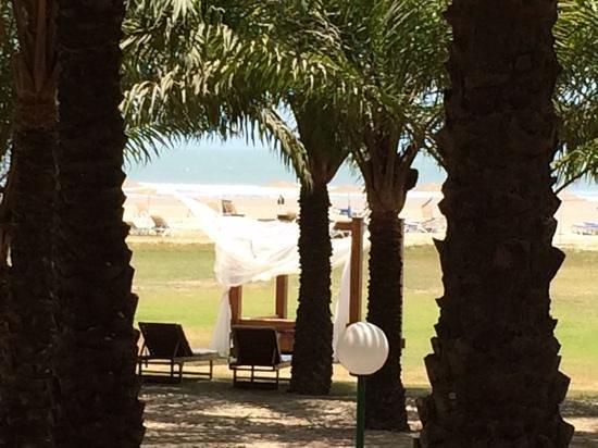 Club Med Cap Skirring : flanerie dans la cocoteraie