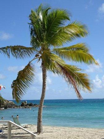 Bluebeard's Beach Club and Villas: Coconut palm