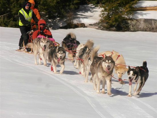 Valley Snow Dogz: 10 dog strong across Squam Lake NH