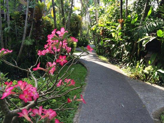 Hotel Vila Lumbung: garden walk to our room