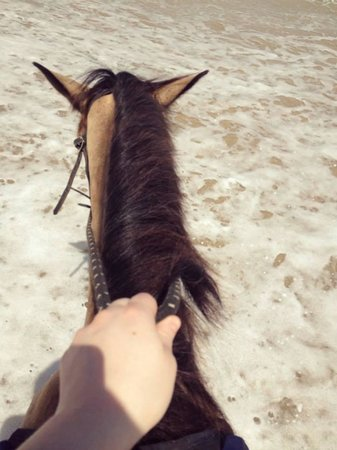 Caribe Horse Riding Club : Lilla.
