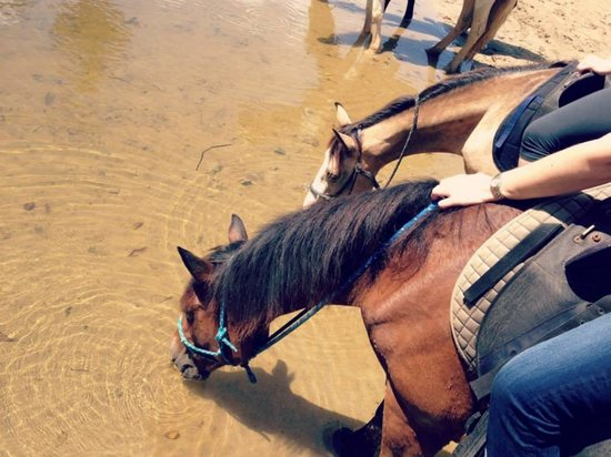 Caribe Horse Riding Club : Water break for the horses.