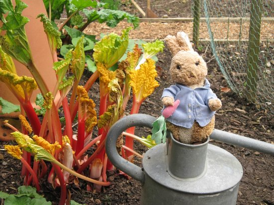 Nunnington Hall: Peter Rabbit in the Kitchen Garden