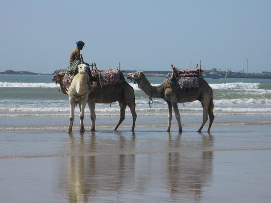 Ocean Vagabond: view f the beach and the horses and camels