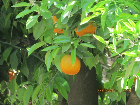 Moroccan House Hotel : Oranges everywhere