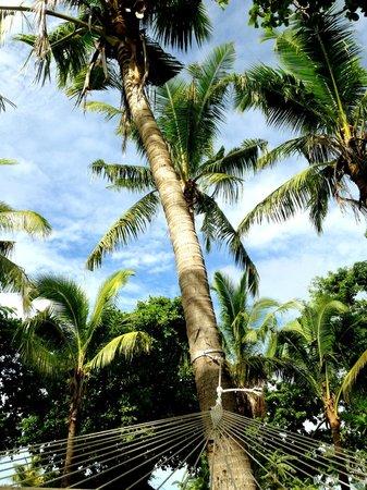 Treasure Island Resort: Trees outside room