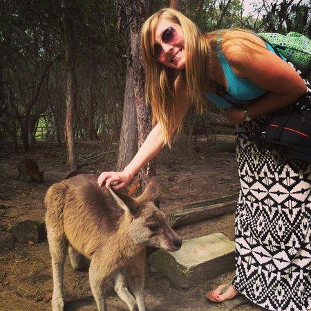Kangarrific Tours: Kangaroos up close
