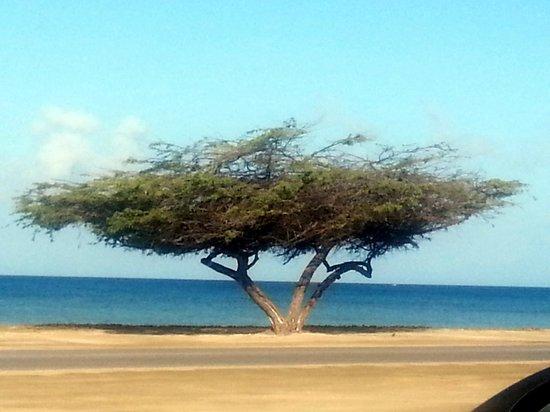 Aruba Beach Villas: em frente ao hotel