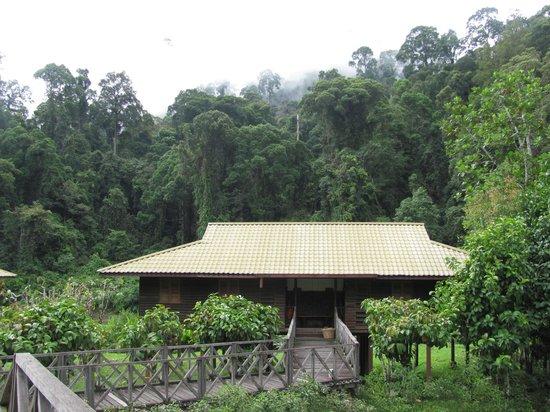 Borneo Rainforest Lodge: exterior of rooms