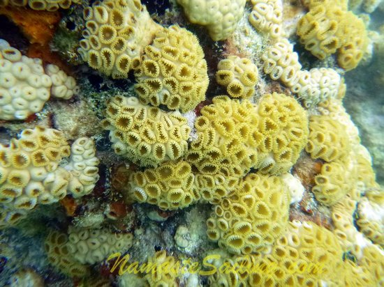 Namaste' Private Sailing Adventures: Abundant and healthy coral!