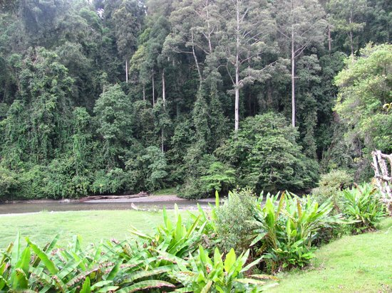 Borneo Rainforest Lodge: view from room