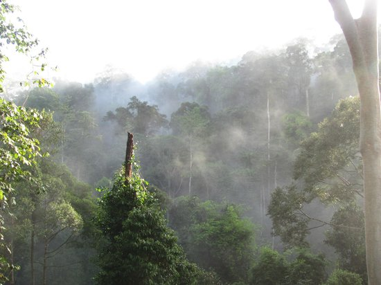 Borneo Rainforest Lodge: canopy walkway