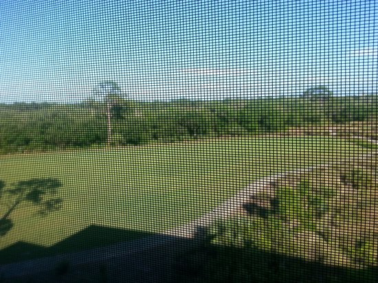 Hyatt Coconut Plantation: View of Golf Course from Patio