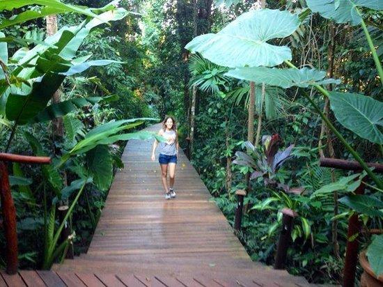 La Aldea de la Selva Lodge: selva