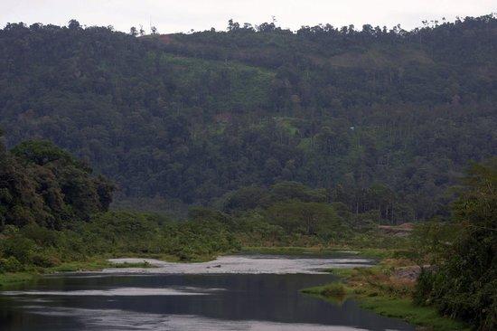 Bocas Ridge Hotel : Bosque Palo Seco en los alrededores del Hotel