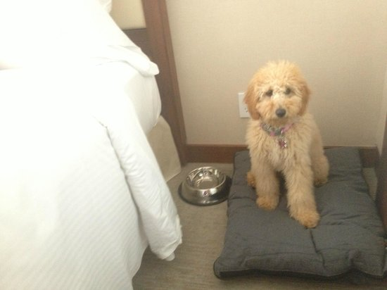 Fairmont Pacific Rim : Even the pets are treated like royalty!