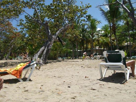 ClubHotel Riu Bachata: nice beach