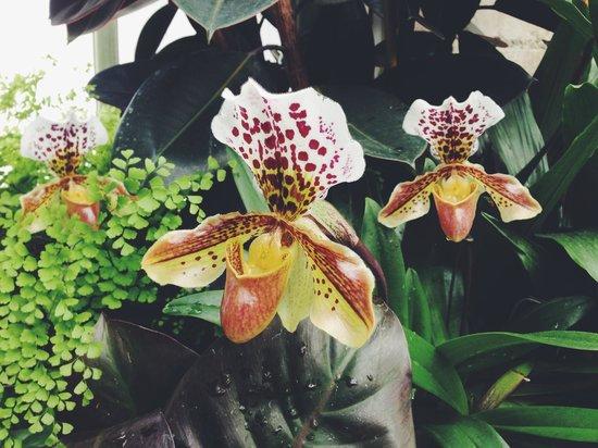 Volunteer Park Conservatory : orchids