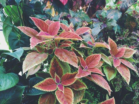 Volunteer Park Conservatory : cool leaves