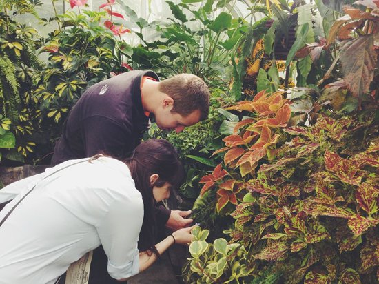 Volunteer Park Conservatory : curiosity