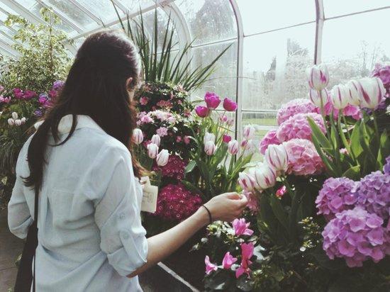 Volunteer Park Conservatory: tulip room