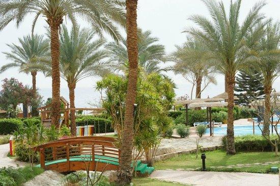 Royal Grand Sharm Hotel: Пальмы