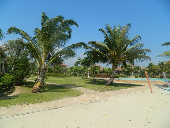 Hopkins Bay Resort: Lovely palm trees and a constant breeze