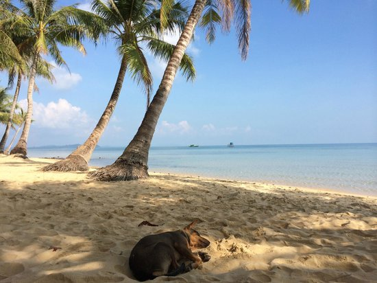 Peppercorn Beach Resort Resident Dog Pepper