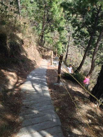 Park Woods Shoghi: 80 meter path leading down to the resort
