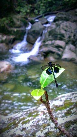 Gunung Gading National Park : Waterfall no 7