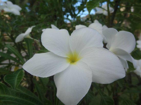 Grand Bahia Principe Punta Cana: flower