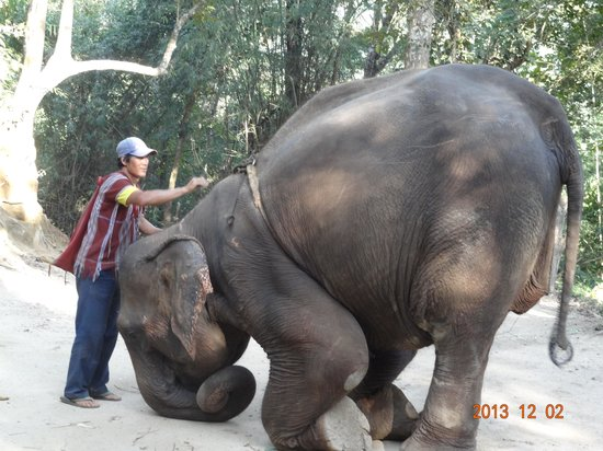 Patara Elephant Farm - Private Tours : mahout just about to get back on his elephant