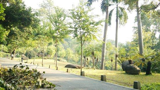 Yuexiu Mountain : 木漏れ日と風景がとっても素敵