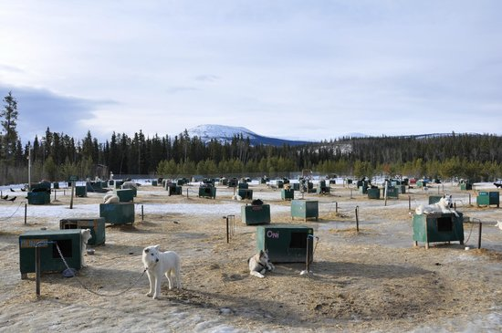 Muktuk Adventures: Every dog has his own kennel