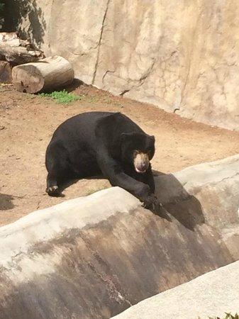 San Diego Zoo : I see Bears.